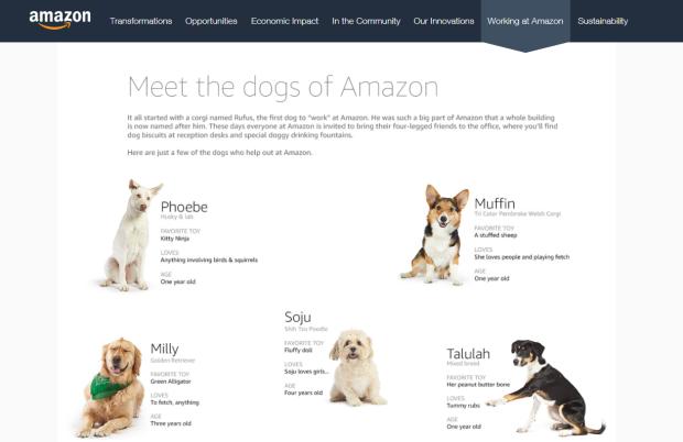 Psy Amazona w firmowej zakładce Kariera. Źródło: www.amazon.com